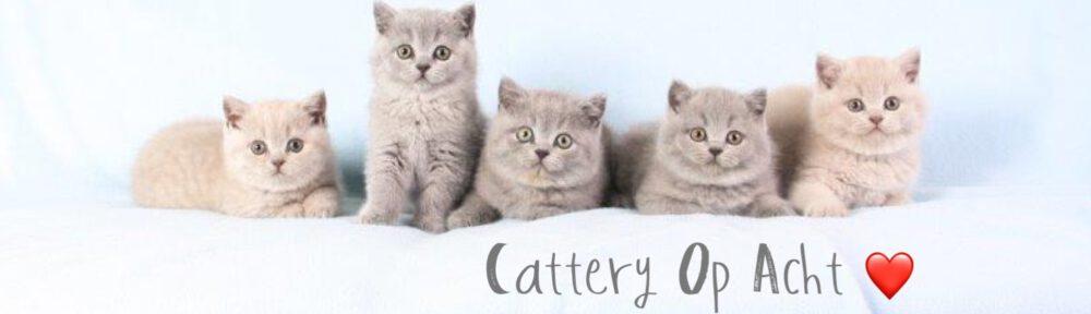 Brits Korthaar Cattery Op Acht